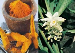 Curcuma bio : propriétés médicinales