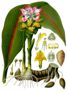 Curcuma-Gingembre - Tubercule