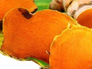 Curcuma bio antioxydant puissant